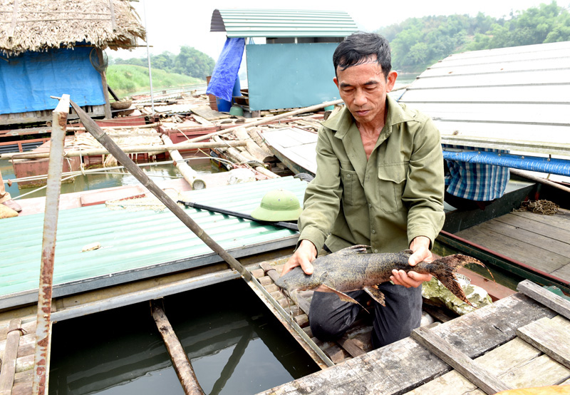 """Tuyên Quang: Nuôi nhốt những con cá đặc sản râu dài trước ví như """"loài thủy quái"""" tinh ranh, dân trở nên giàu có - Ảnh 1."""