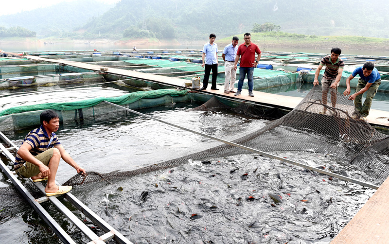 """Tuyên Quang: Nuôi nhốt những con cá đặc sản râu dài trước ví như """"loài thủy quái"""" tinh ranh, dân trở nên giàu có - Ảnh 5."""