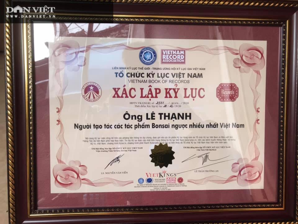 Dị nhân ở Quảng Nam có hàng trăm cây bonsai ngược được xác nhận kỷ lục Việt Nam - Ảnh 2.