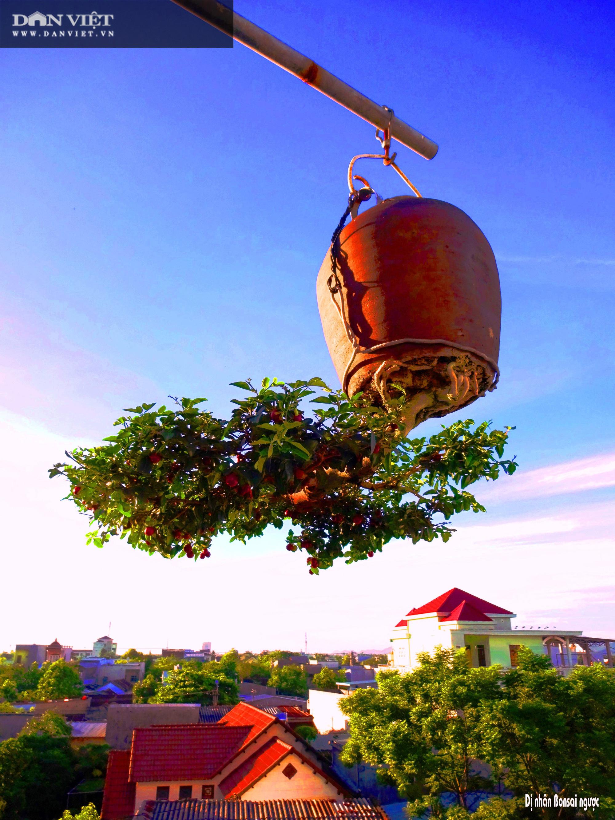 Dị nhân ở Quảng Nam có hàng trăm cây bonsai ngược được xác nhận kỷ lục Việt Nam - Ảnh 4.