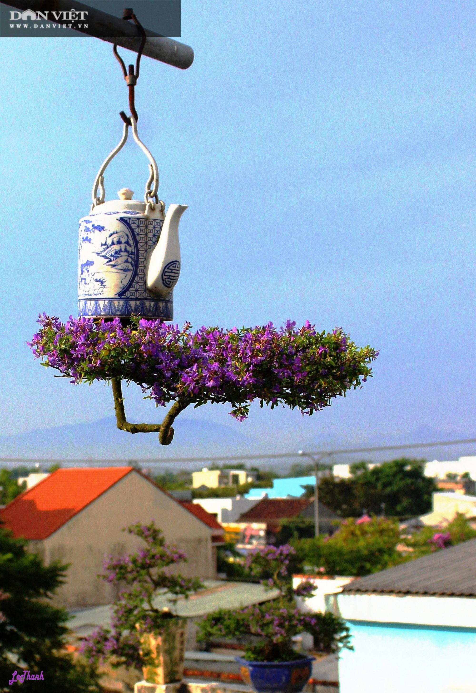 Dị nhân ở Quảng Nam có hàng trăm cây bonsai ngược được xác nhận kỷ lục Việt Nam - Ảnh 5.