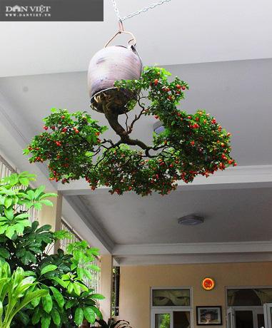 Dị nhân ở Quảng Nam có hàng trăm cây bonsai ngược được xác nhận kỷ lục Việt Nam - Ảnh 11.