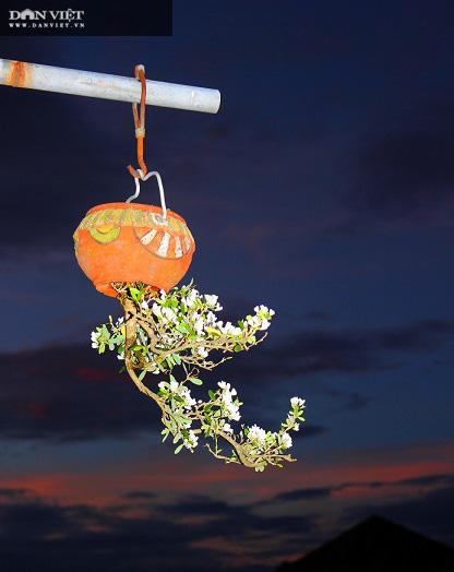 Dị nhân ở Quảng Nam có hàng trăm cây bonsai ngược được xác nhận kỷ lục Việt Nam - Ảnh 7.