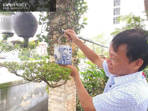 Dị nhân ở Quảng Nam có hàng trăm cây bonsai ngược được xác nhận kỷ lục Việt Nam - Ảnh 8.