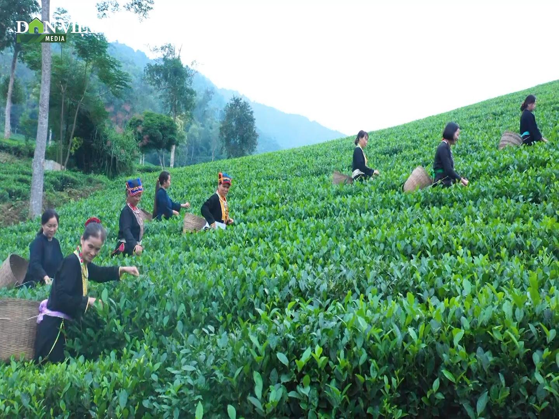 Chương trình mỗi xã, phường một sản phẩm OCOP: Điểm tựa cho nông sản Việt - Ảnh 4.