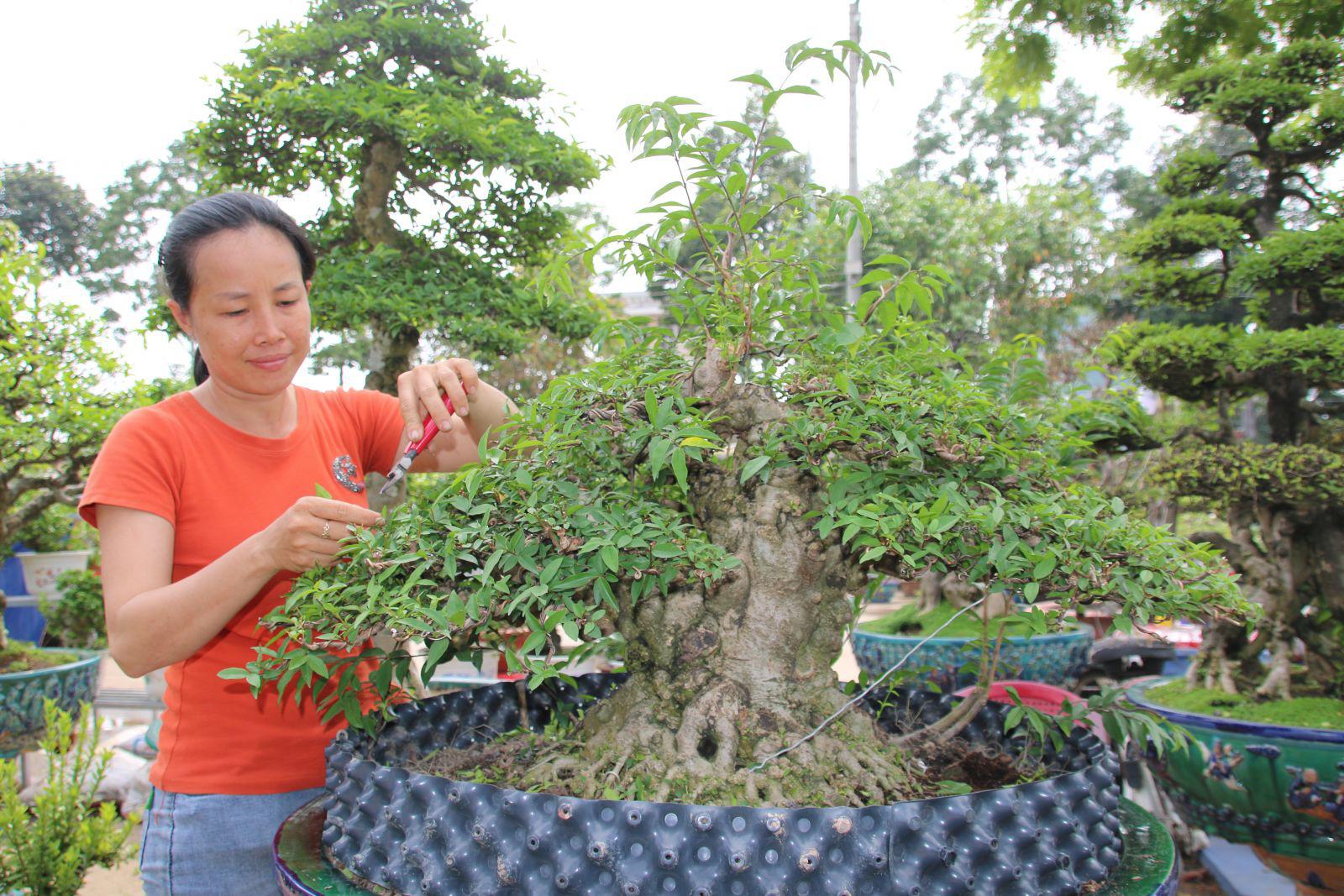 Long An: Nghề makeup cho cây kiểng bonsai, vừa làm vừa chơi cũng ra tiền, đến đàn bà con gái còn ham - Ảnh 4.
