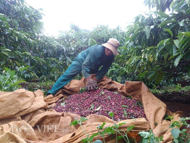 Giá nông sản hôm nay (23/12): Giá tiêu tiếp tục đi xuống, người dân lỗ với giá cà phê hiện tại - Ảnh 2.