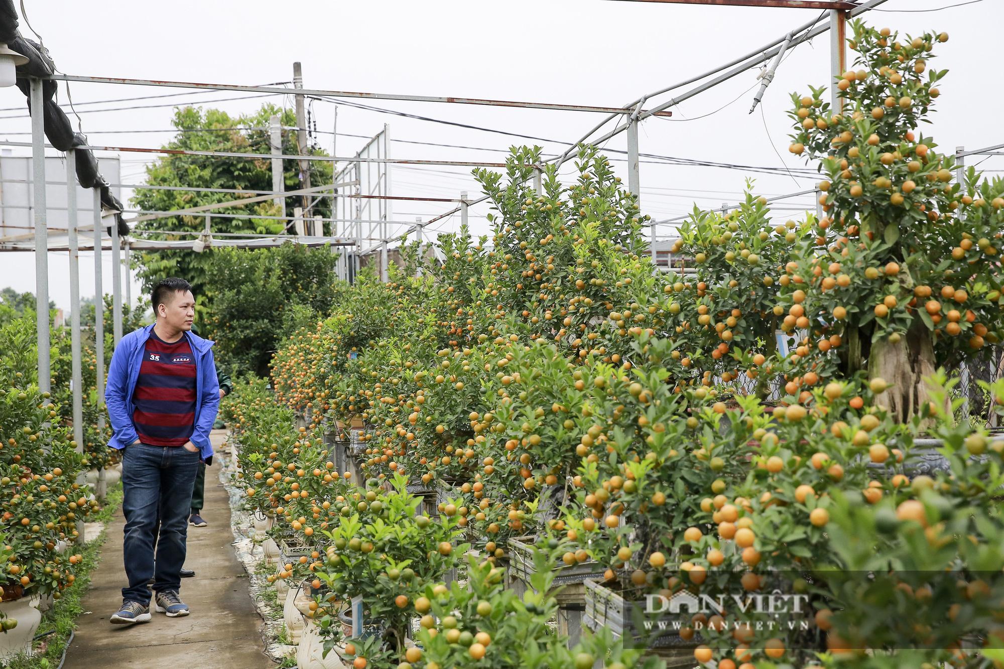 Cực phẩm quất ghép gỗ lũa giá ngàn đô thu hút giới nhà giàu chơi Tết Tân Sửu 2021 - Ảnh 1.