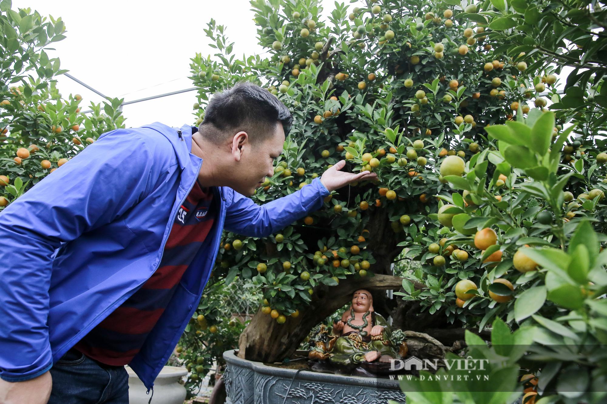 Cực phẩm quất ghép gỗ lũa giá ngàn đô thu hút giới nhà giàu chơi Tết Tân Sửu 2021 - Ảnh 8.