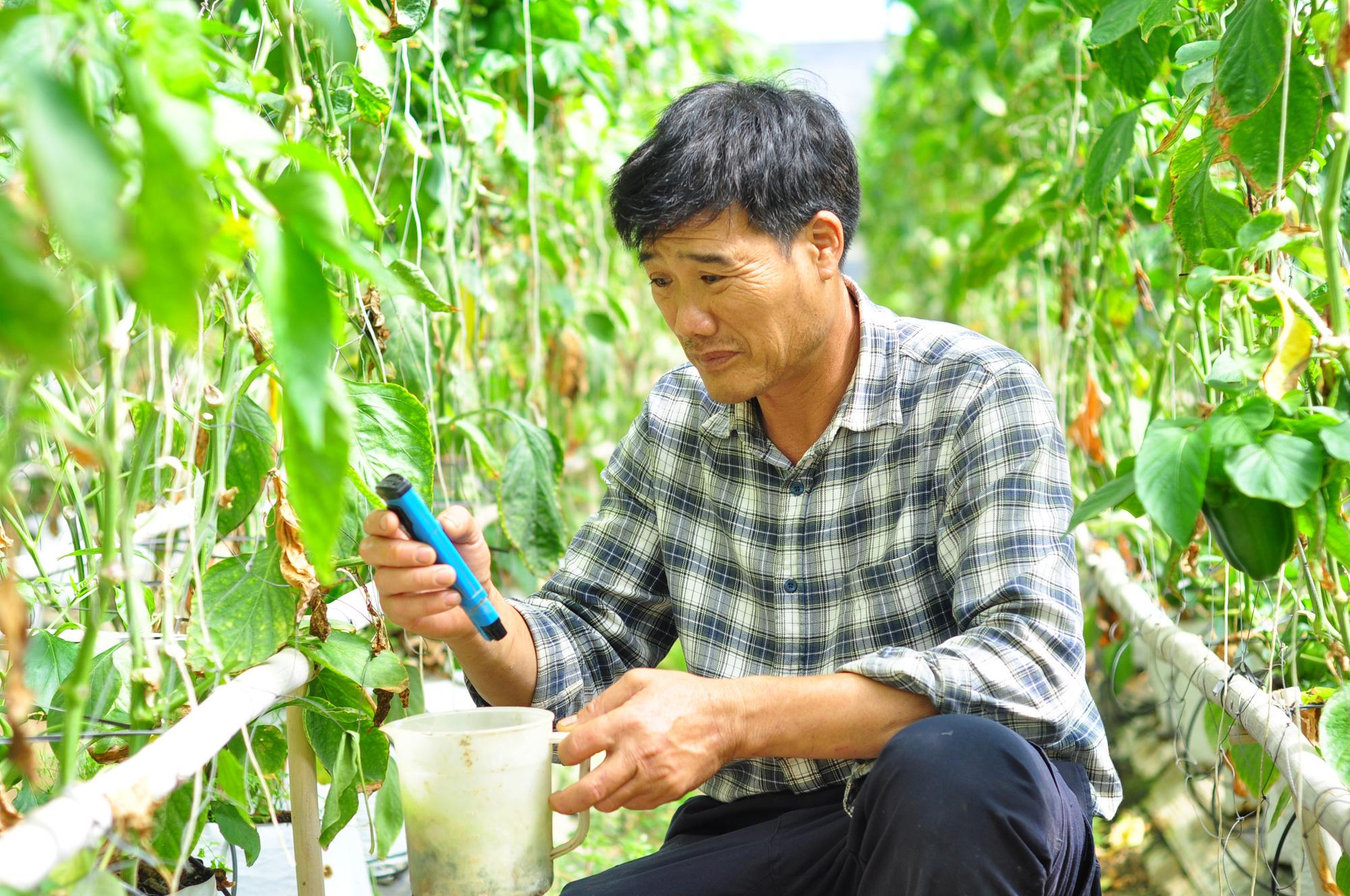 Hơn 15 năm phát triển NNCNC ở Lâm Đồng Bài 1: Người nông dân uống trà nhưng vẫn tưới được cây ngoài đồng - Ảnh 2.