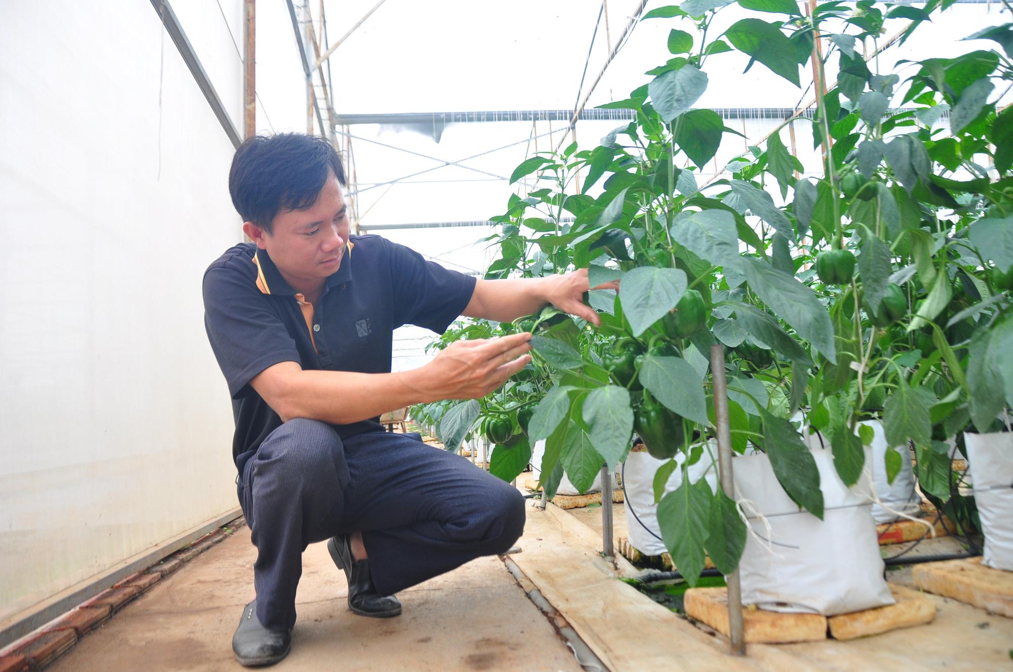 Hơn 15 năm phát triển NNCNC ở Lâm Đồng Bài 1: Người nông dân uống trà nhưng vẫn tưới được cây ngoài đồng - Ảnh 1.