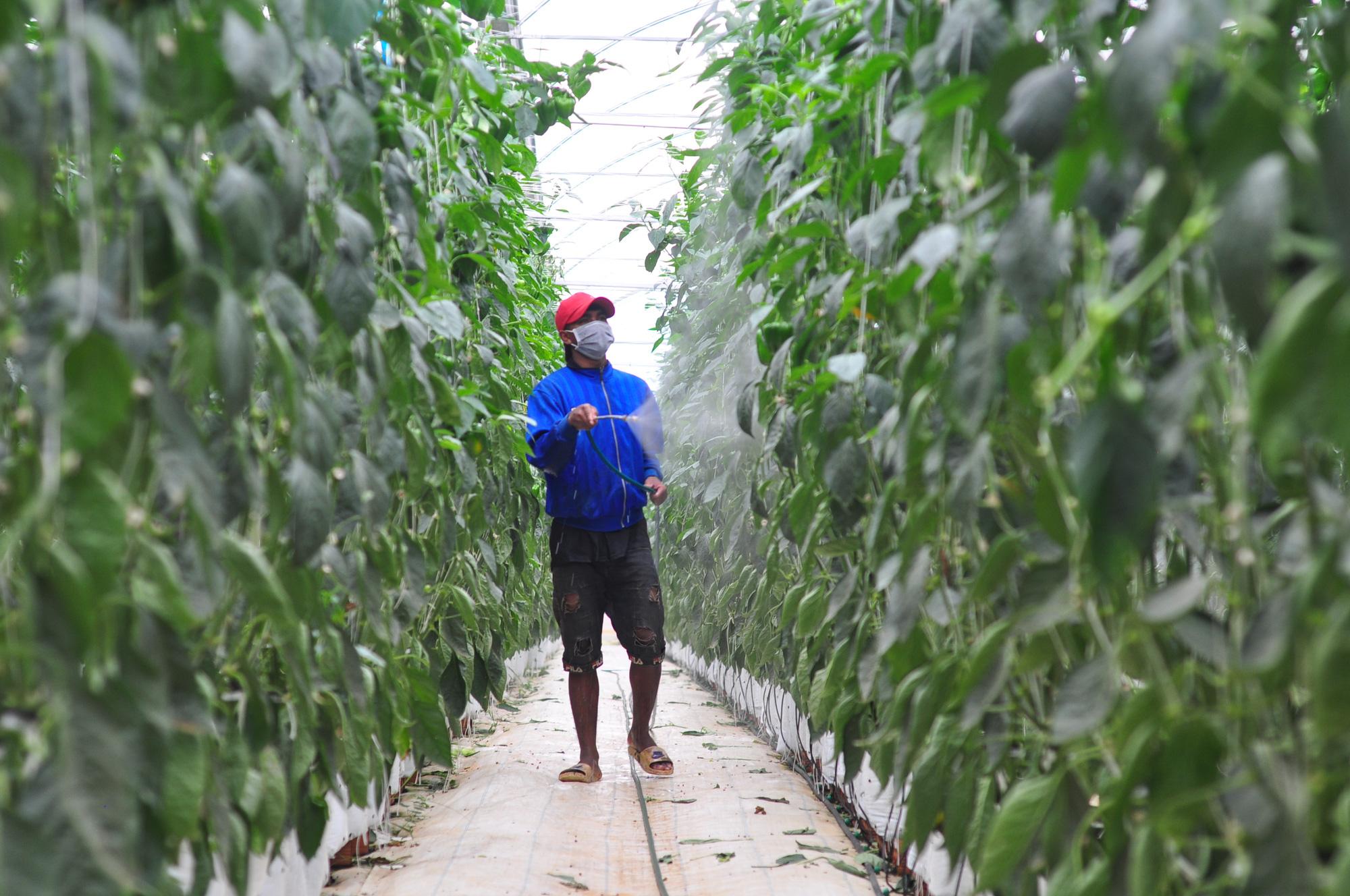 Hơn 15 năm phát triển NNCNC ở Lâm Đồng Bài 3: Nông nghiệp hữu cơ sẽ là hướng đi mới - Ảnh 4.
