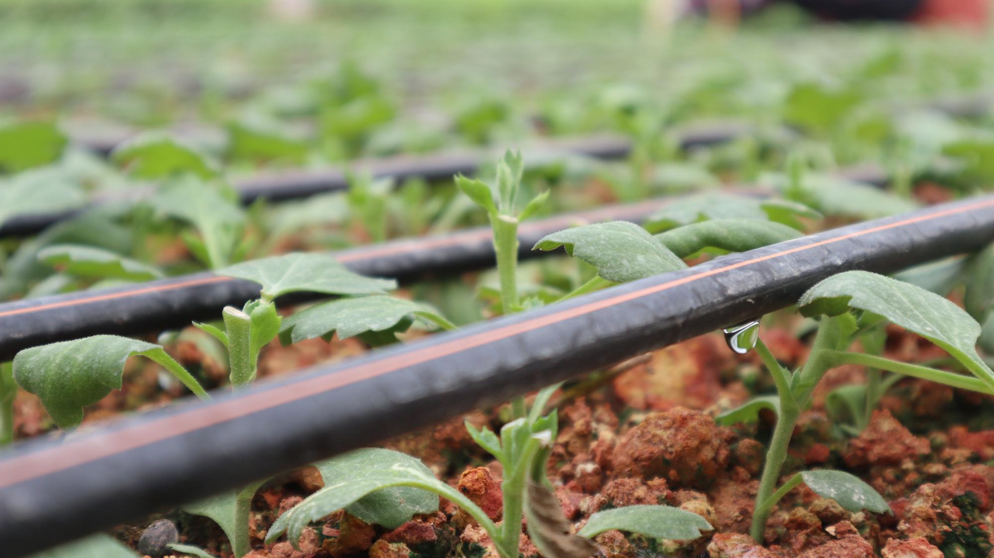 Hơn 15 năm phát triển NNCNC ở Lâm Đồng Bài 3: Nông nghiệp hữu cơ sẽ là hướng đi mới - Ảnh 5.