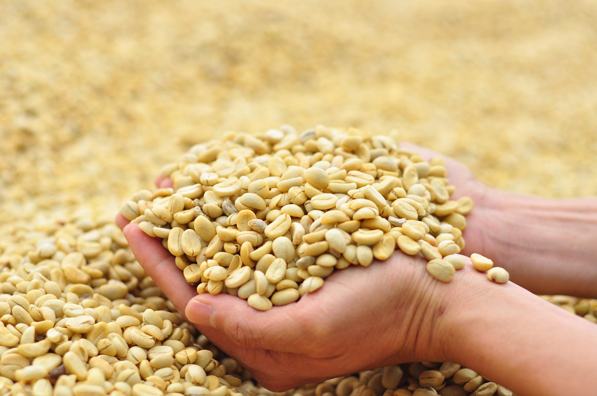 Hơn 15 năm phát triển NNCNC ở Lâm Đồng Bài 3: Nông nghiệp hữu cơ sẽ là hướng đi mới - Ảnh 3.