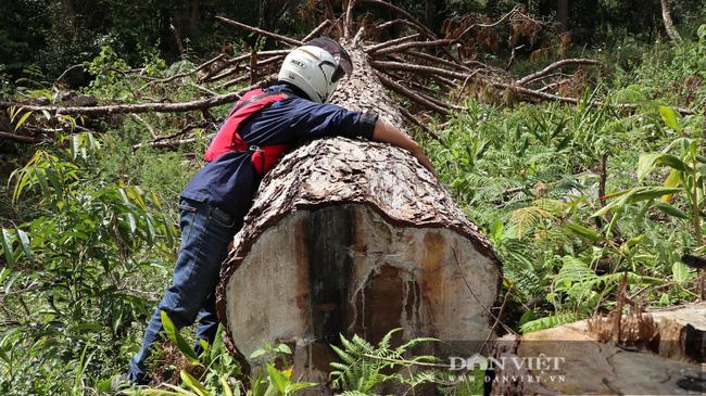 Truy quét những điểm nóng phá rừng trước Tết Nguyên đán Tân Sửu - Ảnh 1.