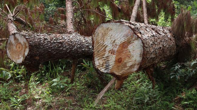 Truy quét những điểm nóng phá rừng trước Tết Nguyên đán Tân Sửu - Ảnh 2.