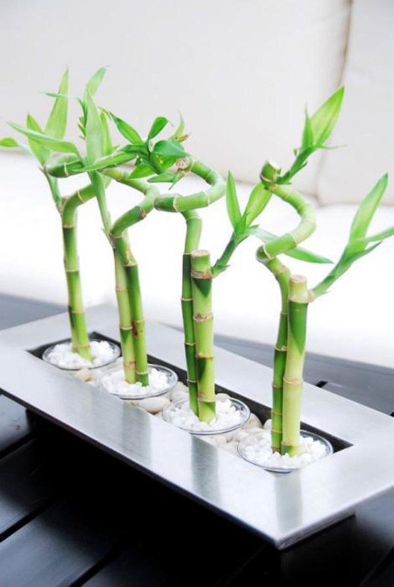 Đầu năm 2021 muốn đón tài lộc nên trồng các cây này trước nhà - Ảnh 3.