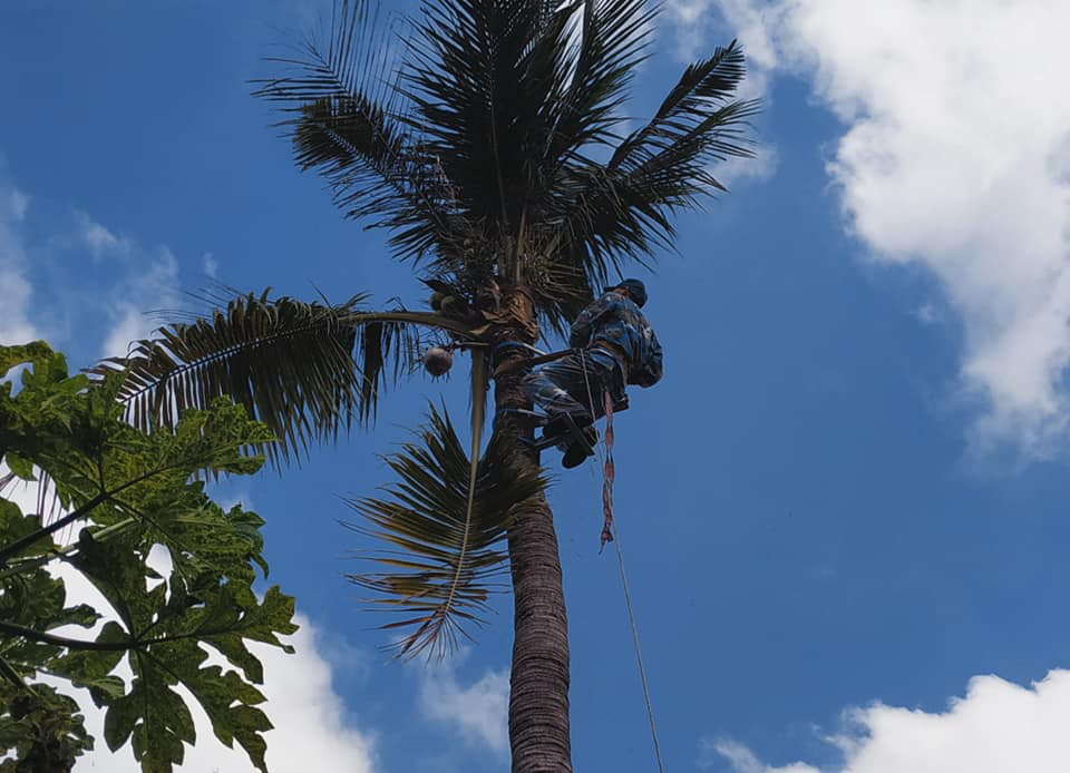 """Hai lúa miền Tây có biệt tài sáng kiến thiết bị leo hái dừa được tôn vinh là """"Nhà khoa học của nhà nông"""" 2020 - Ảnh 2."""