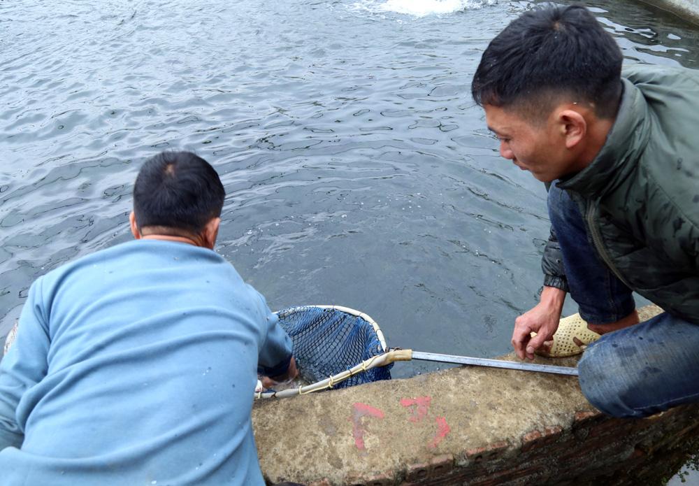 Lào Cai: Đến khổ, nuôi cá hồi bán chật vật, mang tiếng cá quý tộc mà giá bán rẻ hơn cả cá trắm đen - Ảnh 2.