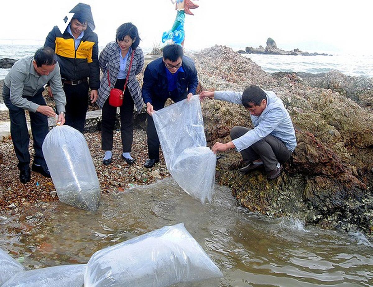 Bình Định: 21.000 con cá rô đầu vuông, trắm cỏ, chẽm giống… được thả xuống đầm - Ảnh 1.