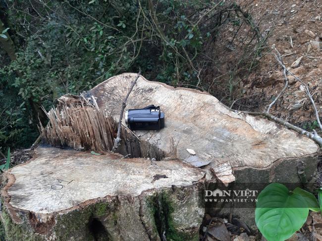 Khởi tố vụ mở hơn 2,4km đường vào phá rừng tự nhiên ở Bắc Kạn - Ảnh 2.