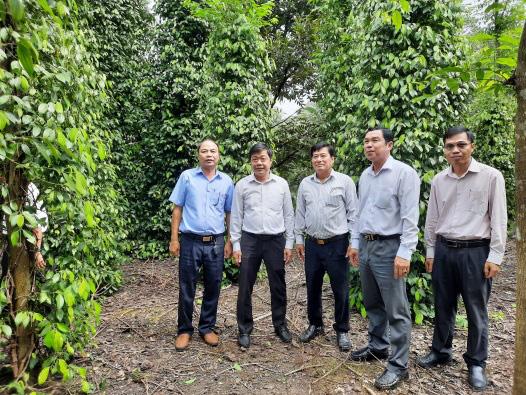Bình Dương: Nhiều nơi sót ruột vì giá tiêu thấp tè, sao nông dân trồng hồ tiêu ở xã này vẫn