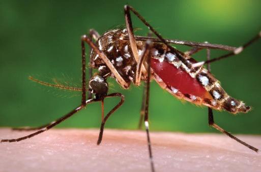 Quốc gia chỉ có duy nhất một con muỗi - Ảnh 1.
