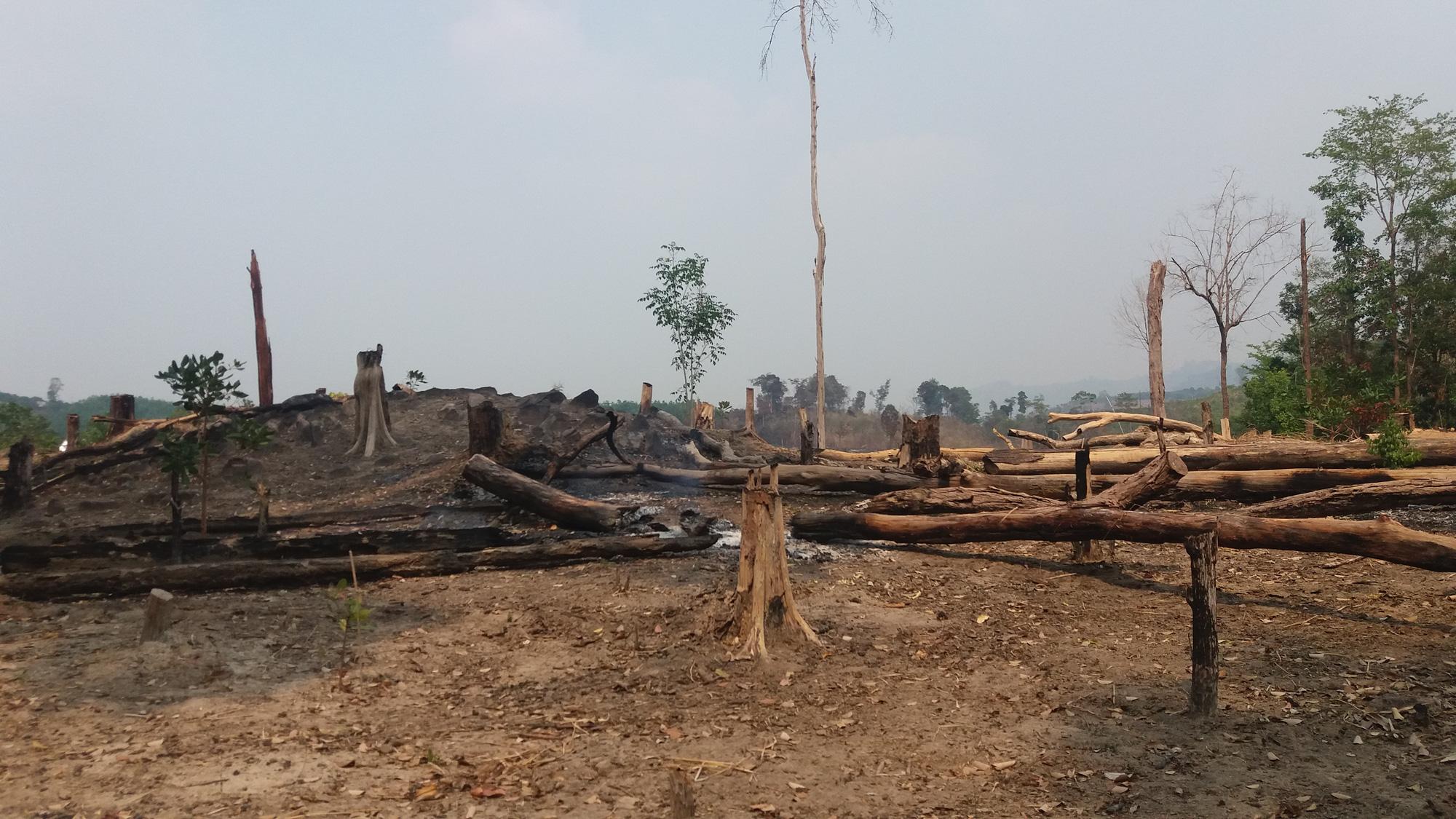Mất hơn 550 ha rừng, dàn lãnh đạo Ban quản lý rừng bị kỷ luật - Ảnh 1.