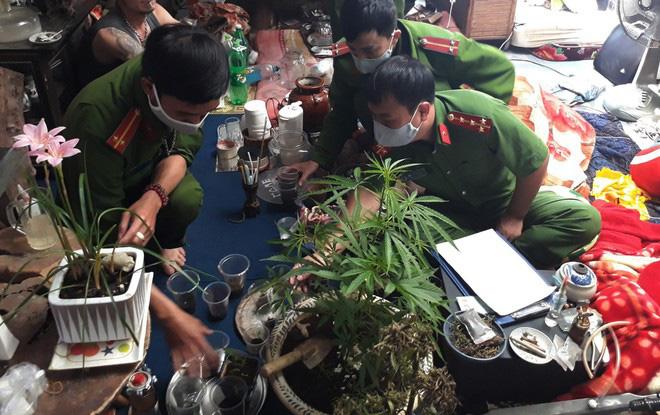 Lâm Đồng: Tình hình trồng cây chứa chất ma túy diễn biến phức tạp, một năm phát hiện hơn 800 cây cần sa - Ảnh 1.