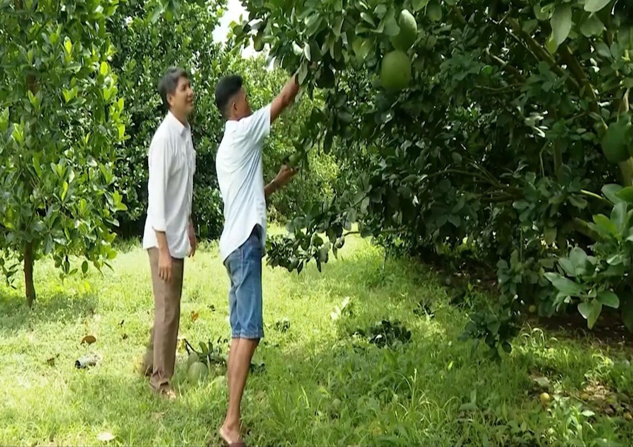 Người dân thị xã Phú Mỹ (Bà Rịa - Vũng Tàu) vươn lên làm giàu nhờ chủ động chuyển đổi cây trồng - Ảnh 3.
