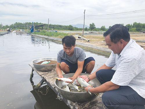 Bình Thuận: Nuôi loài cá tên là chim nhưng không cánh mà có vây vàng, nông dân yên tâm bán 140.000-180.000 đồng/kg