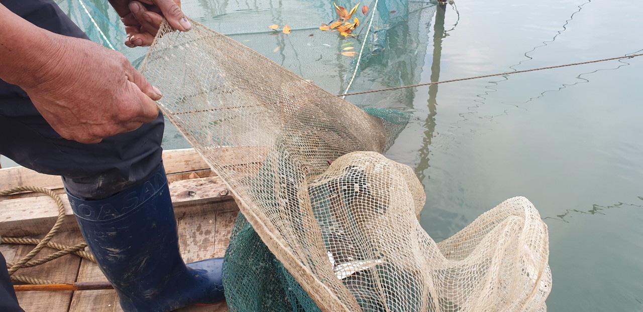 Bát canh ngao mặn chát trên biển Hải Hà - Ảnh 3.