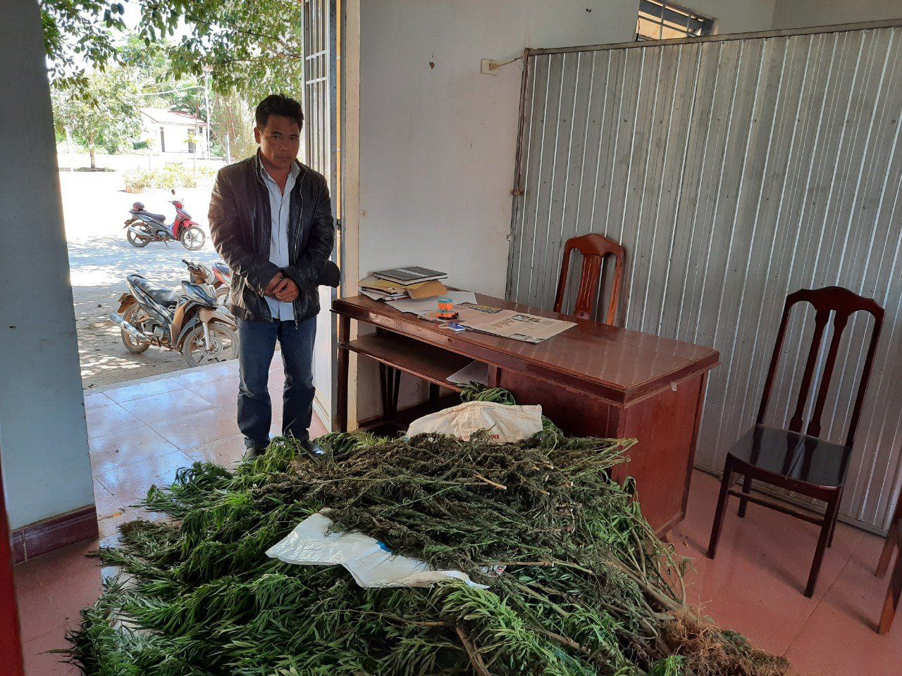 Lâm Đồng: Vì sao tình hình trồng cây chứa chất ma túy diễn biến phức tạp, một năm phát hiện hơn 800 cây cần sa - Ảnh 2.