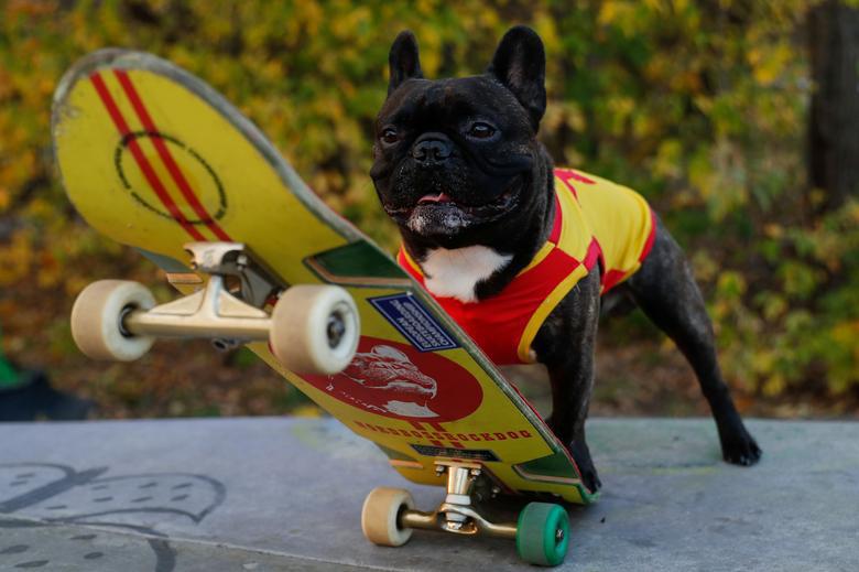 Chó trượt băng, ngỗng được đi ôtô lọt top ảnh vui nhộn năm 2020 - Ảnh 2.