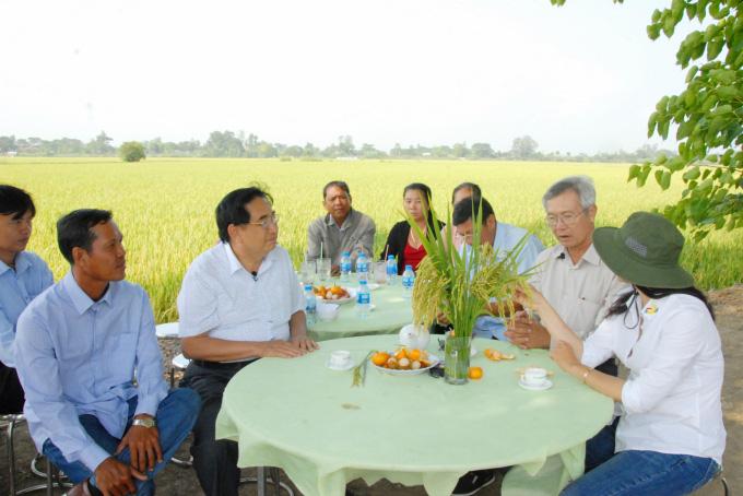 Hiệu quả mô hình trồng lúa bằng sữa tươi - Ảnh 1.