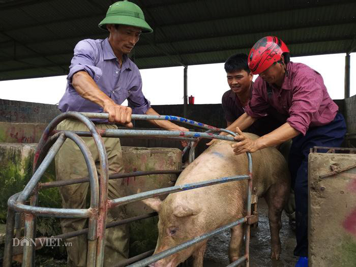 Giá lợn hơi hôm nay (3/12): Một số tỉnh miền Bắc có giá thấp nhất cả nước - Ảnh 1.