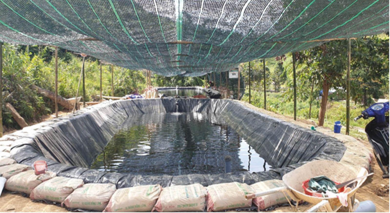 TT-Huế: Nuôi loài cá đặc sản gì ở trên núi của huyện A Lưới mà người dân thu 33 tỷ đồng mỗi năm? - Ảnh 1.