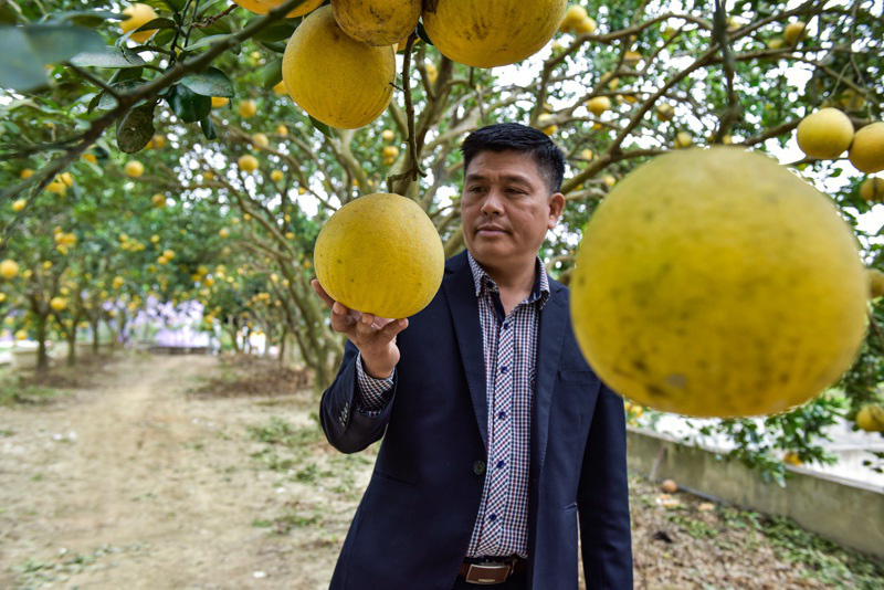 Thanh Hóa: Anh nông dân thu 5 tỷ đồng mỗi năm nhờ 3.000 gốc bưởi Diễn - Ảnh 2.