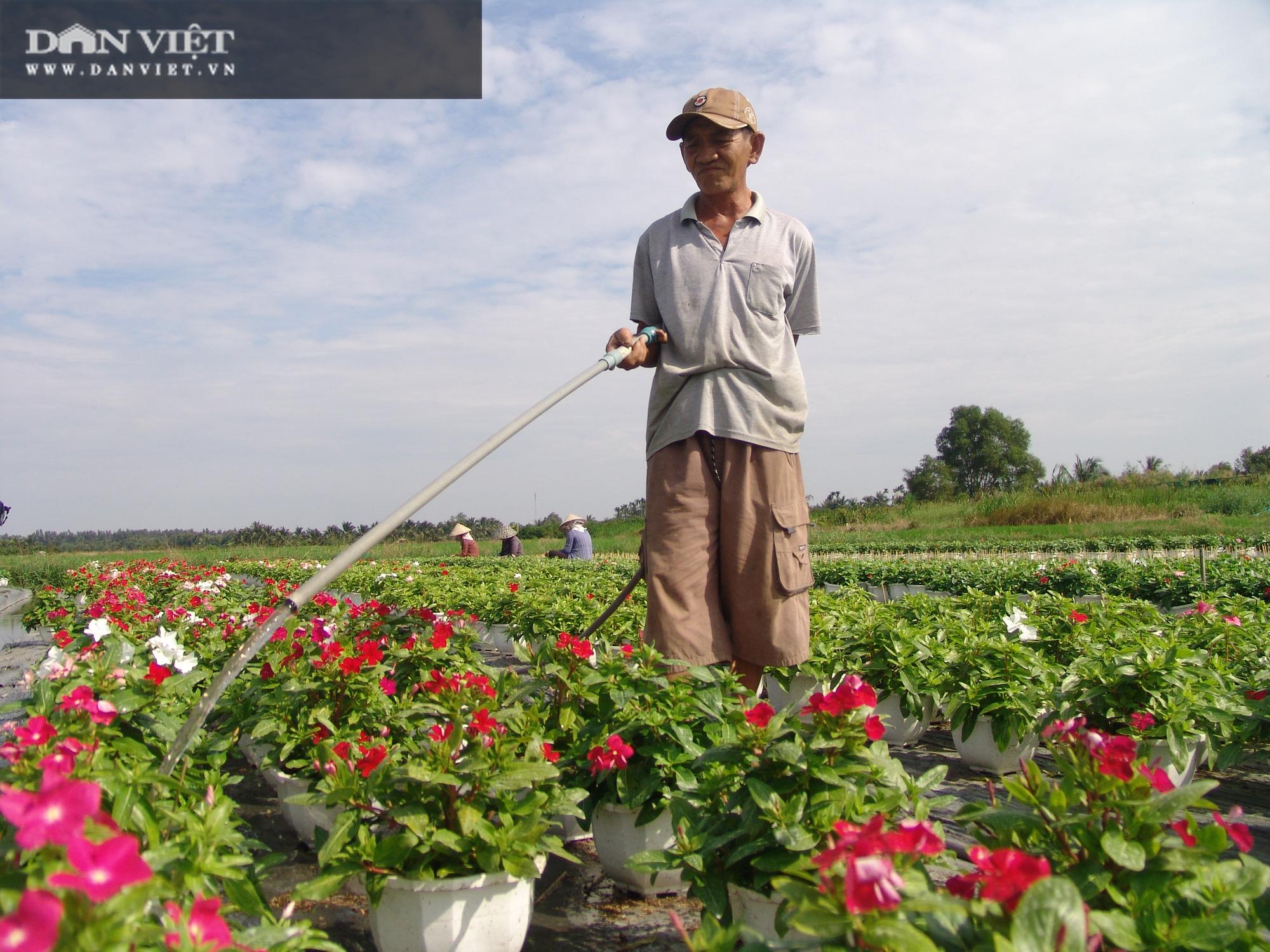 Từ chậu hoa dừa cạn mua chơi, nông dân chân đất trở thành tỷ phú - Ảnh 2.
