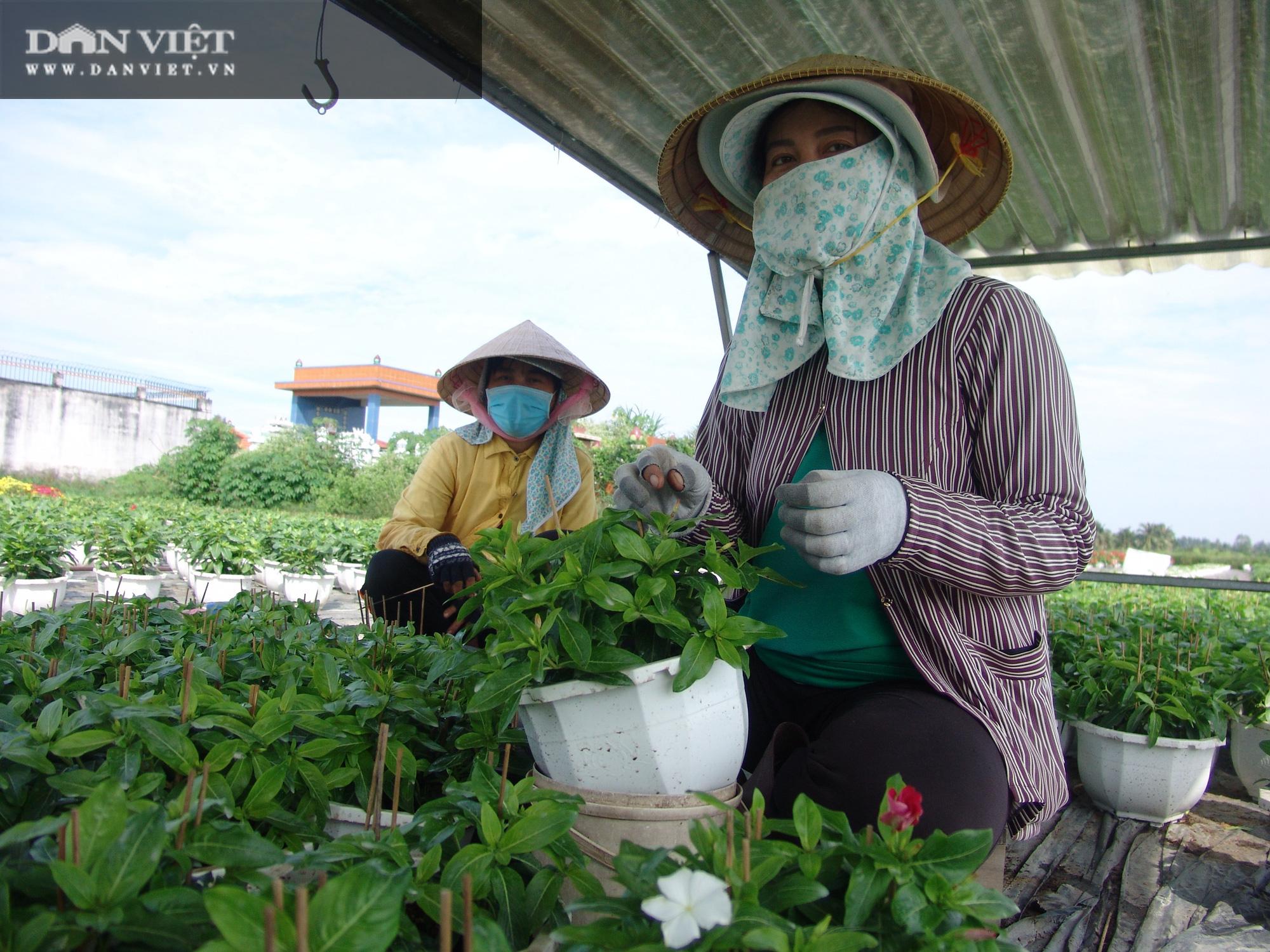 Từ chậu hoa dừa cạn mua chơi, nông dân chân đất trở thành tỷ phú - Ảnh 3.