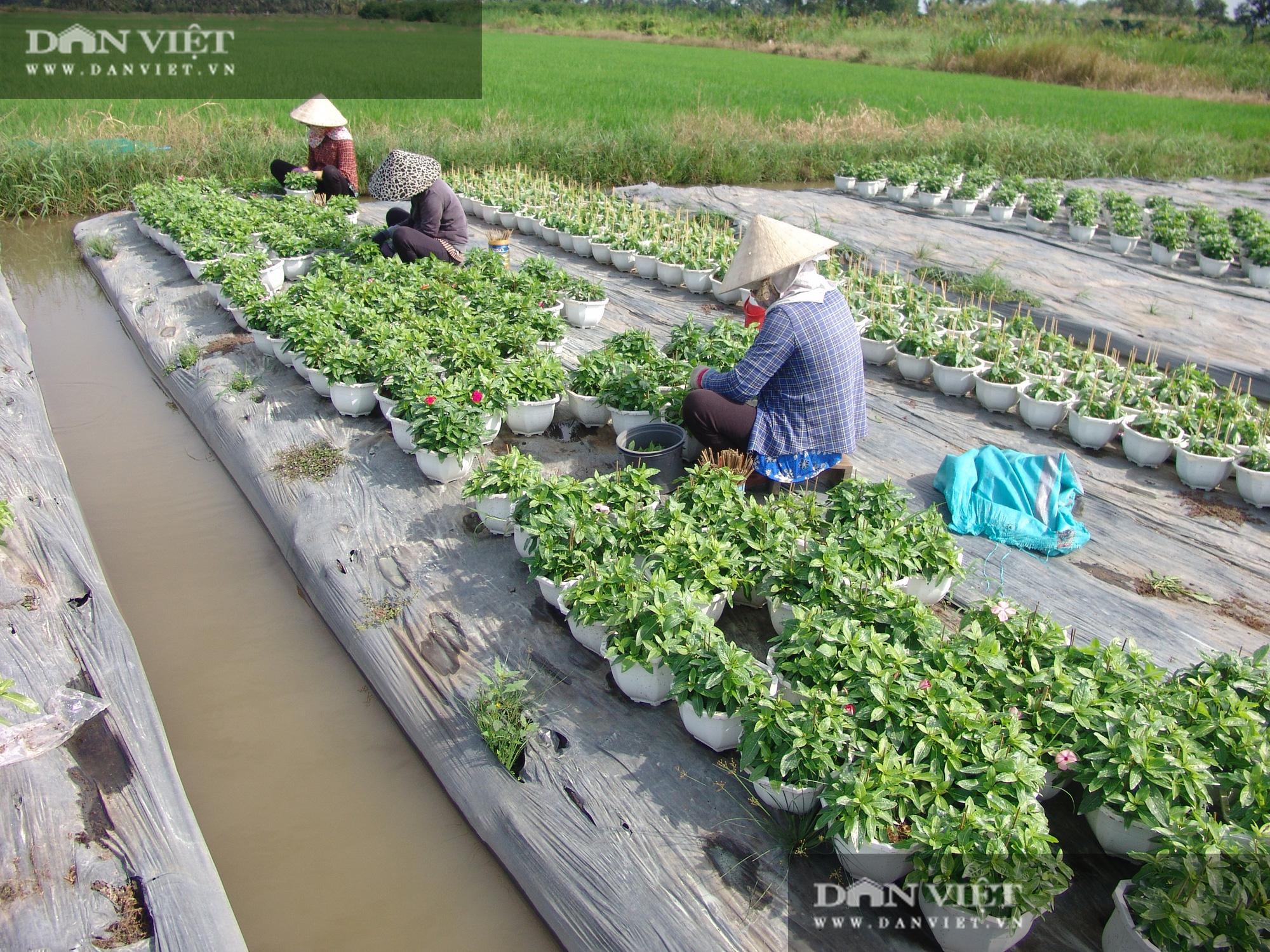 Từ chậu hoa dừa cạn mua chơi, nông dân chân đất trở thành tỷ phú - Ảnh 4.