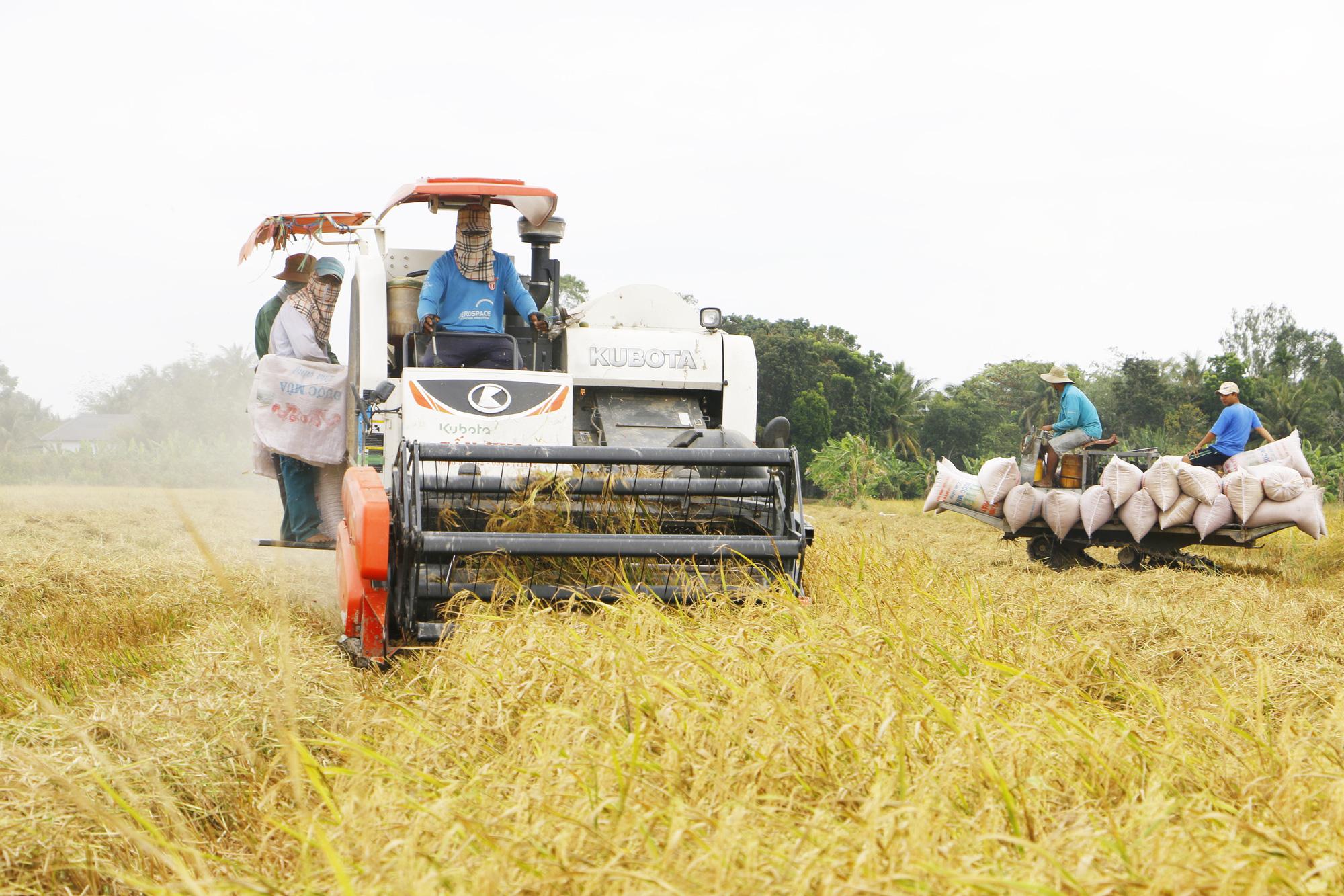 Chủ động rải vụ, ngành trồng trọt thắng lớn - Ảnh 1.