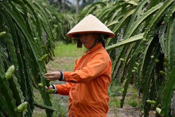 """Bài 3: Để bảo hiểm trở thành """"người bạn"""" cho nông dân - Ảnh 5."""