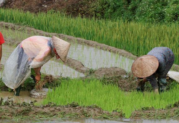 """Bài 3: Để bảo hiểm trở thành """"người bạn"""" cho nông dân - Ảnh 4."""