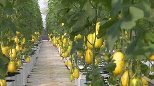 Bắc Giang: Giá trị sản xuất nông nghiệp tăng 6,7%, cao nhất trong 10 năm qua - Ảnh 4.