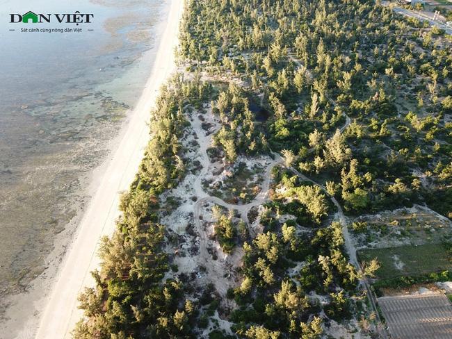 Video: Rầm rập đoàn xe khai thác cát trái phép ở rừng phi lao phòng hộ Ninh Thuận - Ảnh 4.