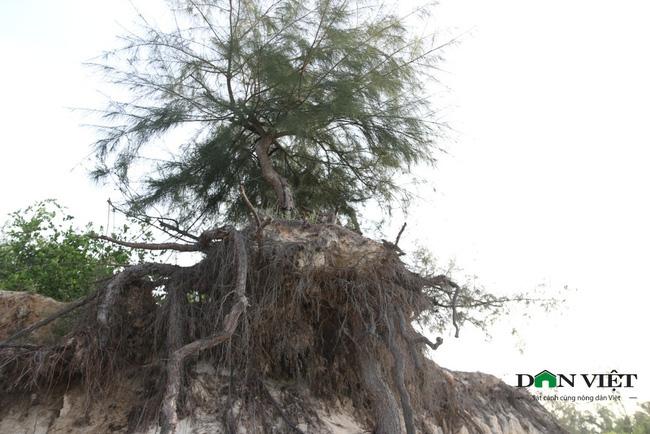 Video: Rầm rập đoàn xe khai thác cát trái phép ở rừng phi lao phòng hộ Ninh Thuận - Ảnh 5.