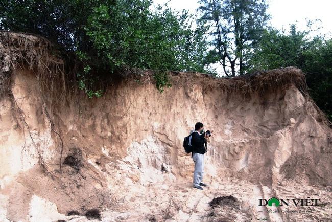 Video: Rầm rập đoàn xe khai thác cát trái phép ở rừng phi lao phòng hộ Ninh Thuận - Ảnh 6.