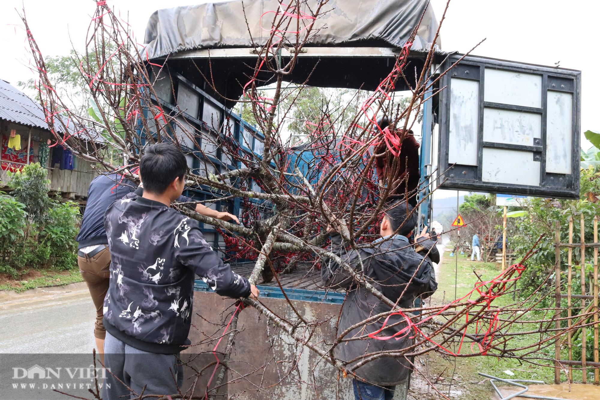 Sơn La: Cơ quan chức năng nói gì về chỉ đạo của Thủ tướng về cấm chặt đào rừng - Ảnh 6.