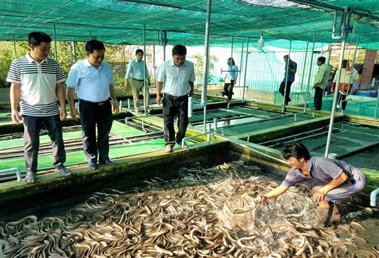 Trà Vinh: Nuôi hơn 21.000 con lươn đồng trong bể xi măng, kéo vỉ lên khách bất ngờ vì thấy toàn lươn to bự - Ảnh 1.